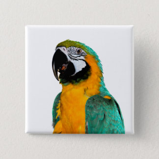 colorful gold teal macaw parrot bird portrait 2 inch square button