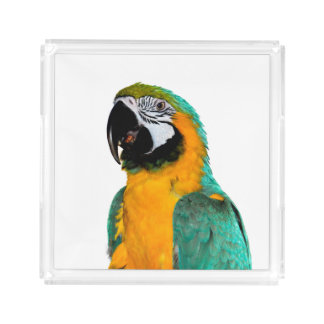 colorful gold teal macaw parrot bird portrait acrylic tray