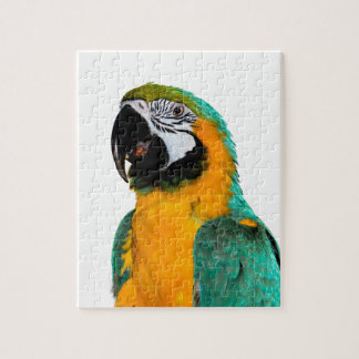 colorful gold teal macaw parrot bird portrait jigsaw puzzle