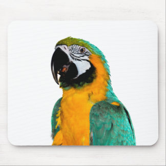 colorful gold teal macaw parrot bird portrait mouse pad