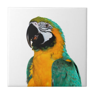 colorful gold teal macaw parrot bird portrait tile