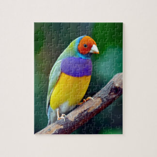 Colorful gouldian finch jigsaw puzzle