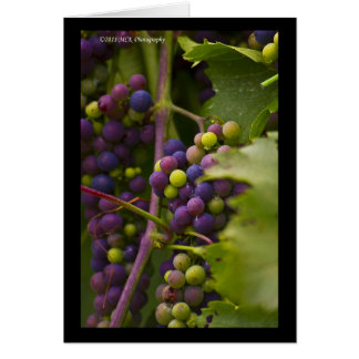 Colorful Grapes Card
