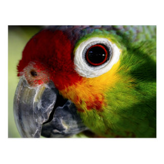 Colorful Green Red Yellow Parrot Gifts Postcard