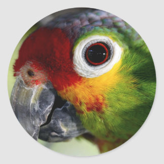 Colorful Green Red Yellow Parrot Gifts Classic Round Sticker
