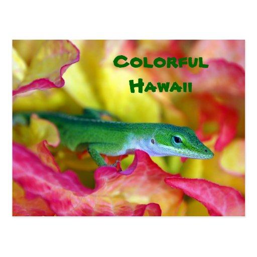 Colorful Hawaii Postcards