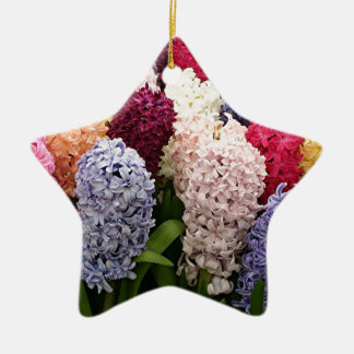 Colorful Hyacinth flowers in bloom 1 Ceramic Star Ornament
