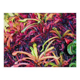 Colorful Ivy - Poster