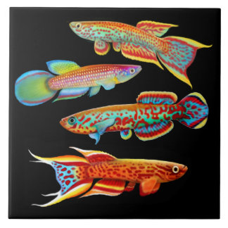 Colorful Killifish Tile