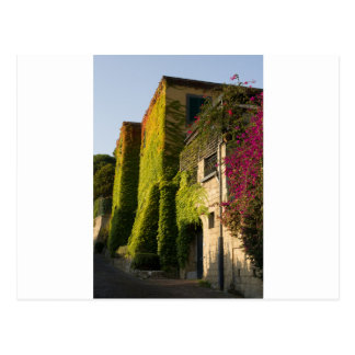 Colorful leaves on house walls postcard