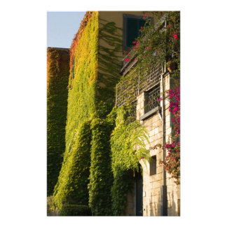 Colorful leaves on house walls stationery