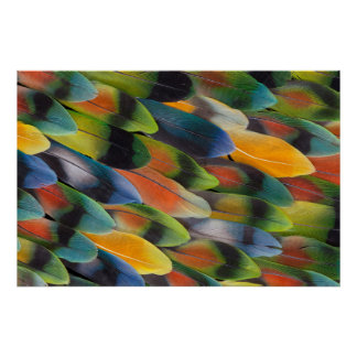 Colorful Lovebird Feather Design Poster