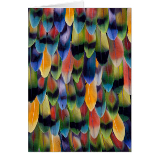 Colorful lovebird parrot feathers card