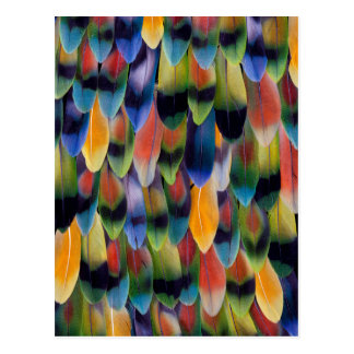 Colorful lovebird parrot feathers postcard