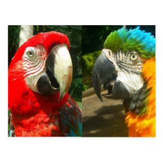 Colorful Macaws, Trinidad Postcard
