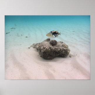 Colorful Maldives Blue Ocean Triggerfish Souvenir Poster