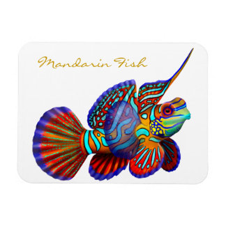 Colorful Mandarin Goby Reef Fish Premium Flexi Mag Rectangular Photo Magnet