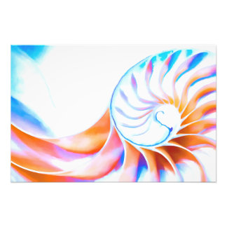 Colorful Nautilus Photo Print