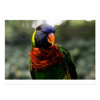 Colorful Parakeet Mug Shot Postcards