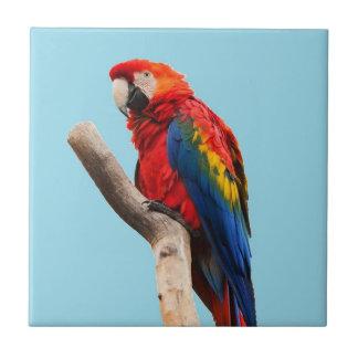 Colorful Parrot Portrait Photo Tile
