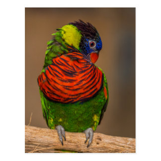 Colorful parrot postcard