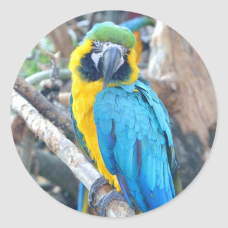 Colorful Parrot - Sticker
