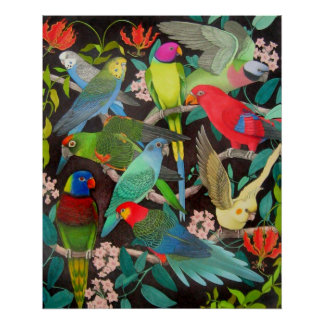 Colorful Parrots and Parakeets Poster