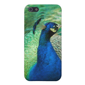 Colorful Peacock iPhone 4 Case