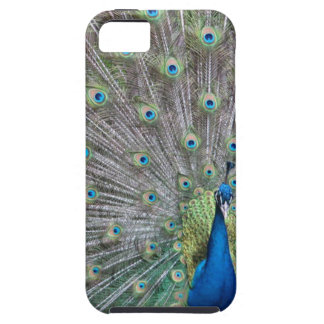 Colorful Peacock iPhone 5 Case
