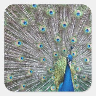 Colorful Peacock Square Sticker