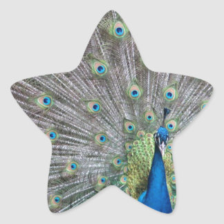 Colorful Peacock Star Sticker