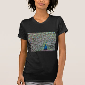 Colorful Peacock T-Shirt