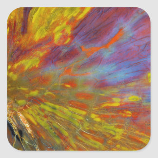 Colorful Petrified Wood close-up Square Sticker