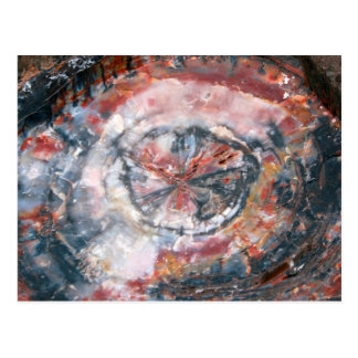 Colorful Petrified Wood photo Postcard