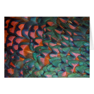Colorful Pheasant Feathers Abstract Card