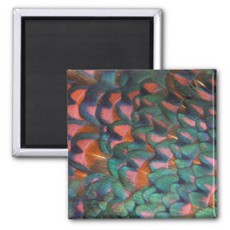 Colorful Pheasant Feathers Abstract Magnet