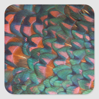 Colorful Pheasant Feathers Abstract Square Sticker