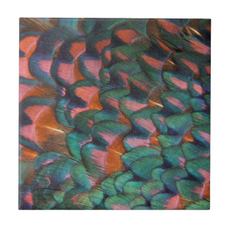 Colorful Pheasant Feathers Abstract Tile
