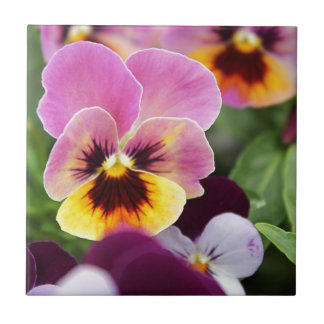 Colorful Pink and Yellow Pansy Flower Ceramic Tile