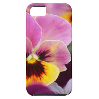 Colorful Pink and Yellow Pansy Flower iPhone 5 Case