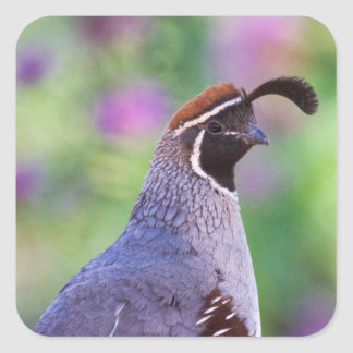 Colorful Quail Square Sticker