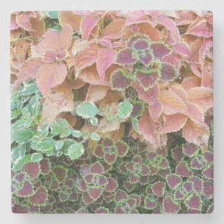 Colorful Rainbow Coleus Plants Photograph Stone Coaster