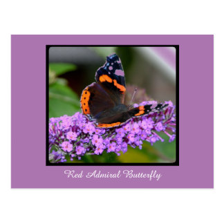 Colorful Red Admiral Butterfly Postcard