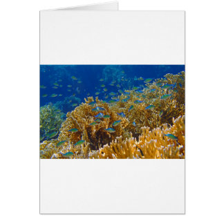colorful red sea card