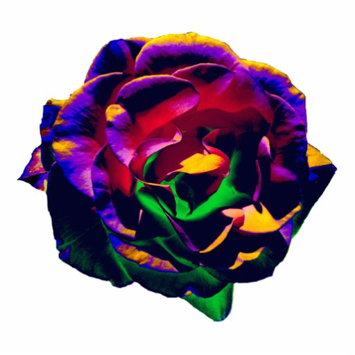 Colorful Rose pin Acrylic Cut Outs