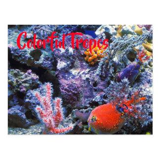 Colorful Sea Coral Postcard