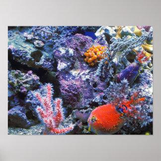 Colorful Sea Coral Poster
