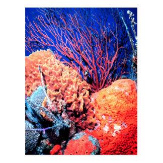 Colorful Sea Sponge Postcard