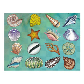 Colorful Seashell Postcard