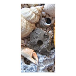 Colorful Seashells Customized Photo Card